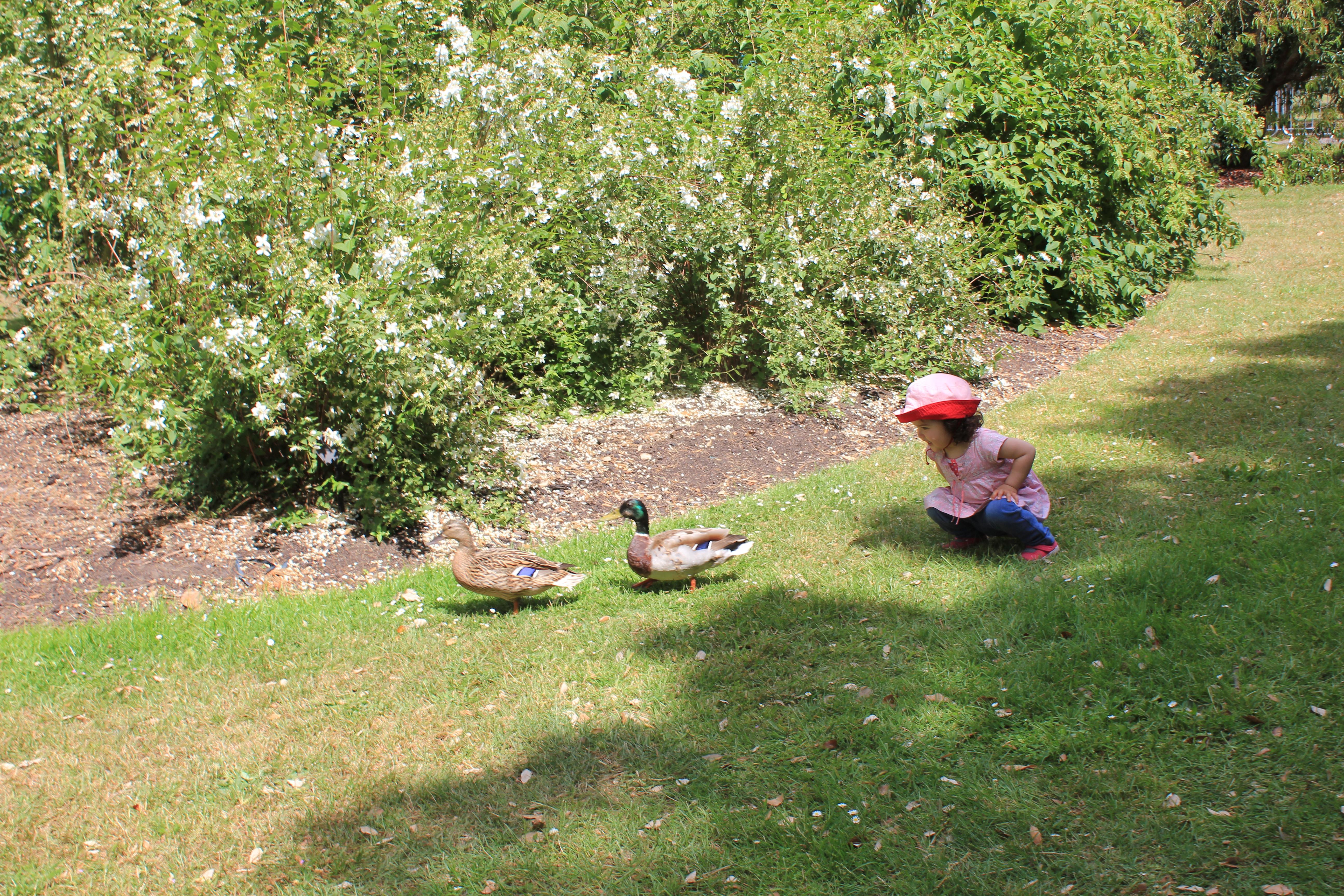 ヴァージニア・ウルフと歩くキュー植物園の夏