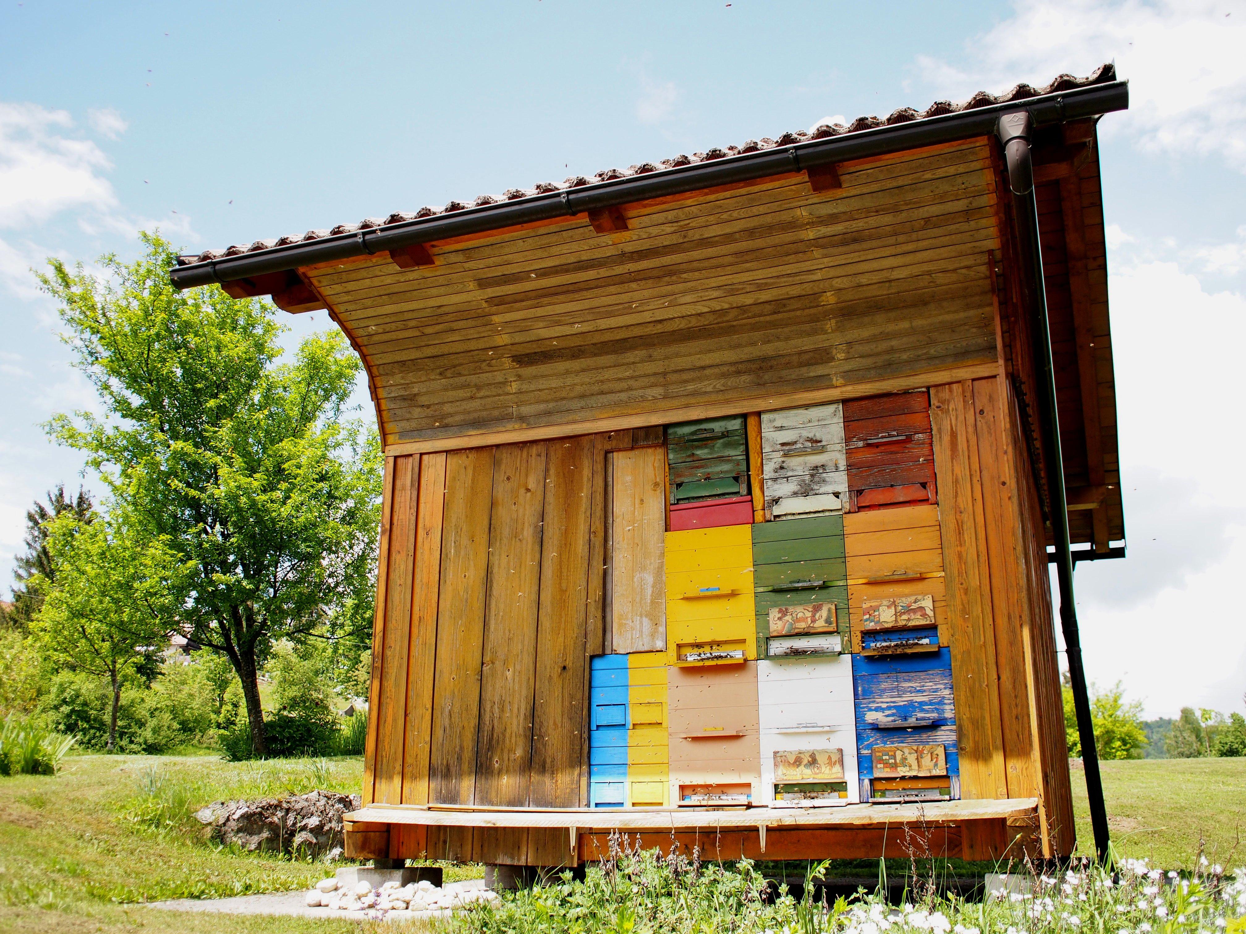 スロベニアとミツバチ