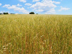 """フランスで密かなブーム!  """"穀物のキャビア"""""""