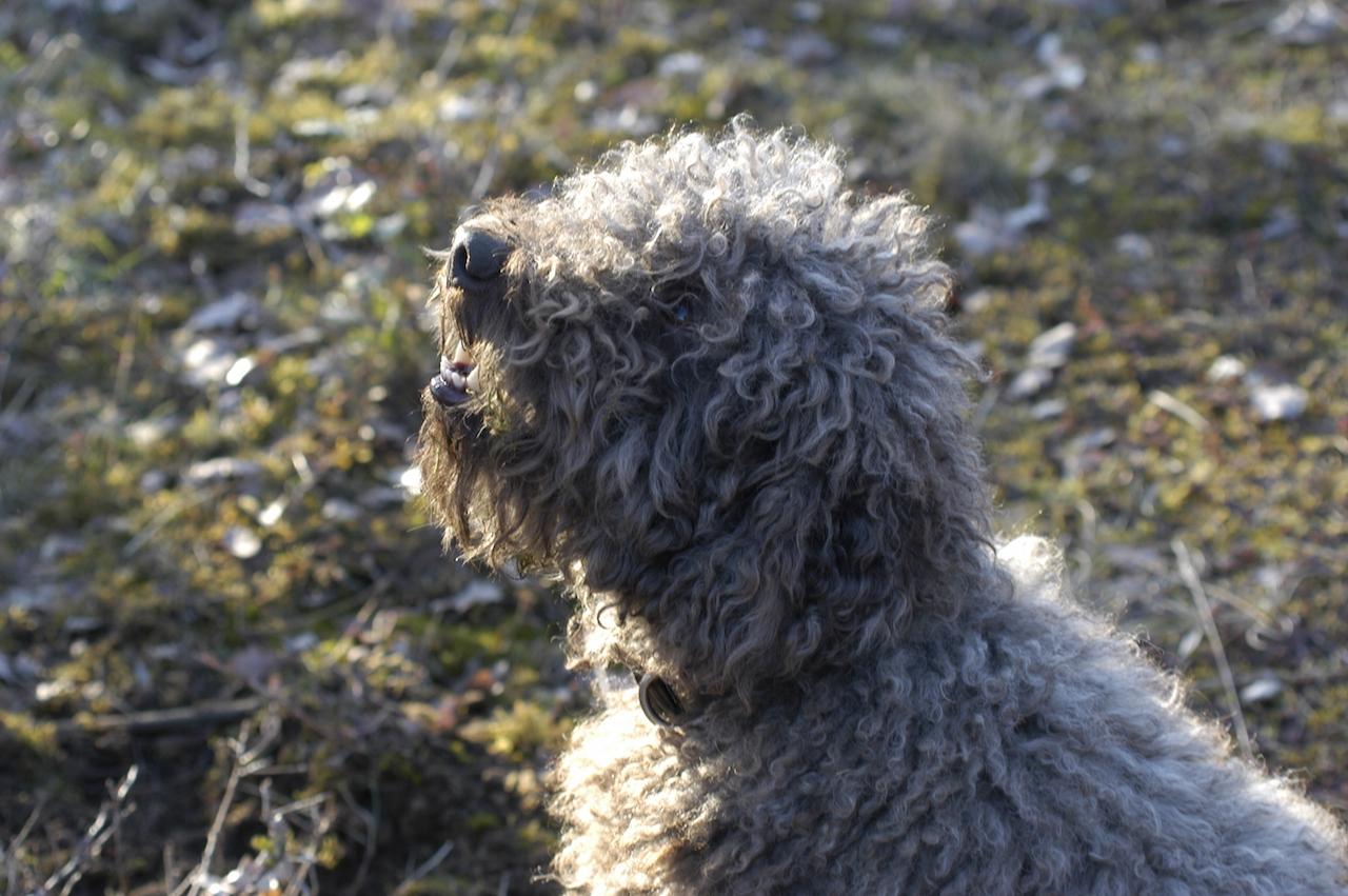 トリュフ犬と飼い主のスリリングな駆け引き