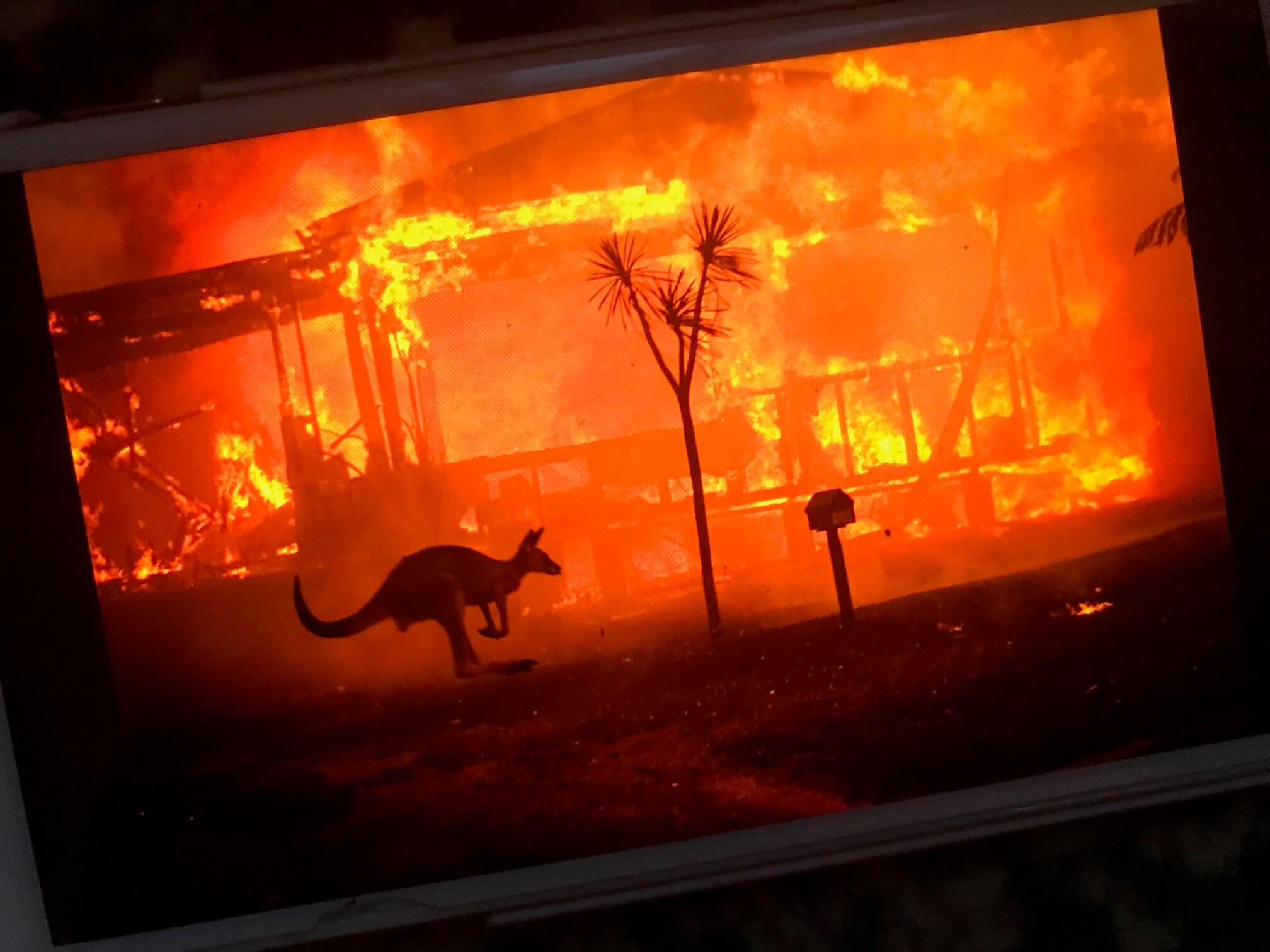 オーストラリアの森林火災、緊急アンケート