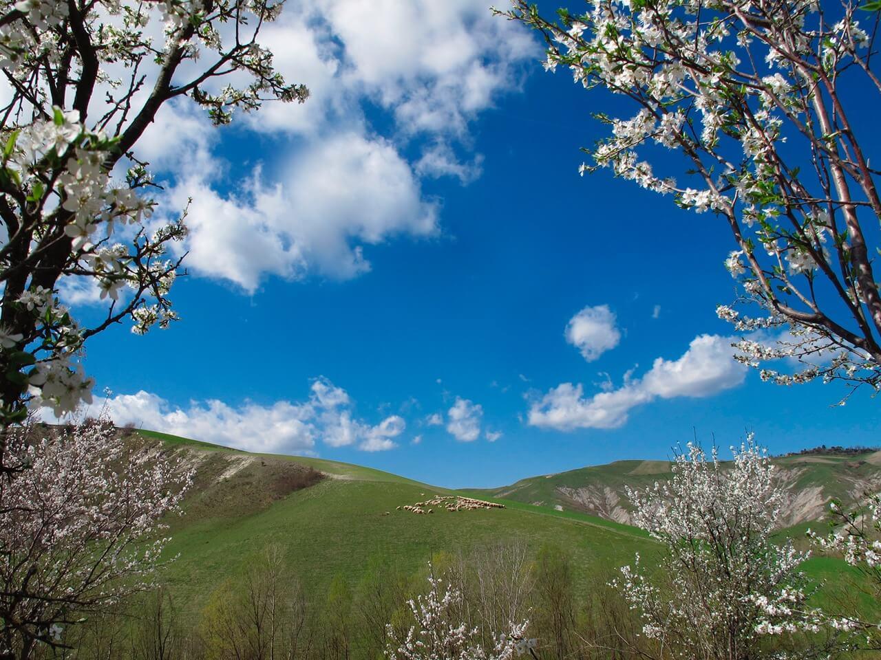 ボローニャから春便り 散歩のススメ
