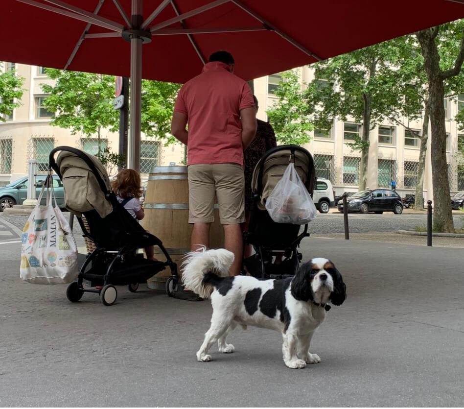 滞仏日記「犬好きのぼくが、絶対犬を飼わない理由」