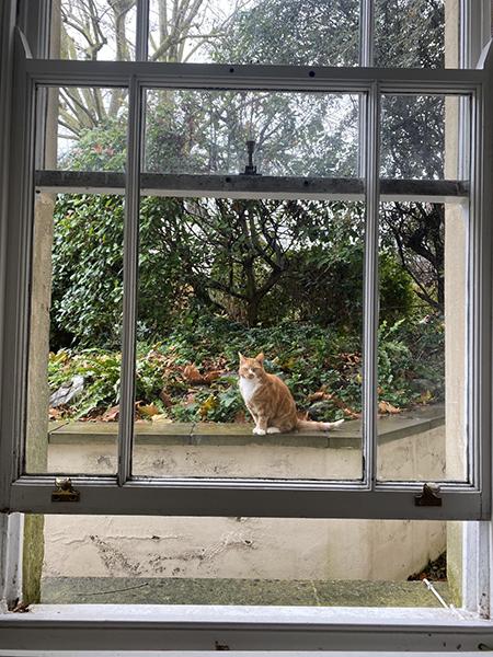 英国留学生が感じるコロナ禍の日常と未来、そして、猫と。