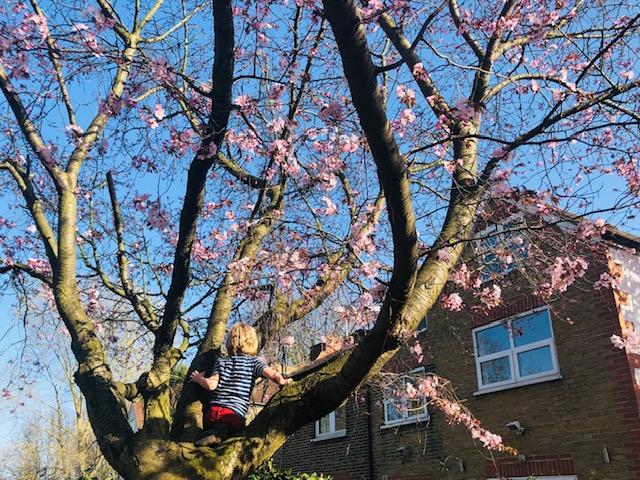 ロンドン最新情報「コロナで苦しむ英国人を癒す、日本の花見がハナミになる」