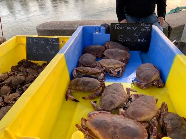 退屈日記「田舎で蟹を買う。一杯、260円って、いいの? 安すぎるじゃん」